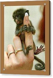 Baby Finger Monkey Tan Border Acrylic Print by L Brown