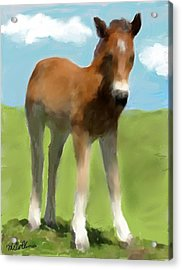 Acrylic Print featuring the painting Baby Horse by Mary M Collins