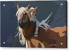 Baby Horse Acrylic Print by Nydia Williams