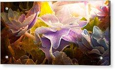 Baby Hydrangeas Acrylic Print