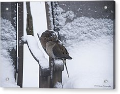Acrylic Print featuring the photograph Baby It's Cold Outside by Phil Abrams