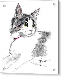 Baby Kitten Acrylic Print