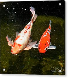 Acrylic Print featuring the photograph Baby Koi Makes An Appearance by Susan Wiedmann