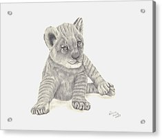 Acrylic Print featuring the drawing Baby Lion by Patricia Hiltz
