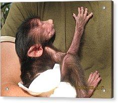 Baby Monkey Acrylic Print by Dick Willis