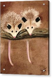 Baby Possums Acrylic Print