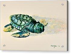 Da150 Baby Sea Turtle By Daniel Adams  Acrylic Print