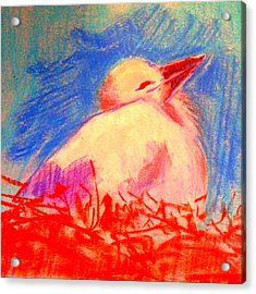 Baby Stork Acrylic Print