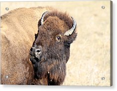 Back Off Acrylic Print by Rick Rauzi