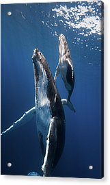 Back To The Surface Acrylic Print by Barathieu Gabriel
