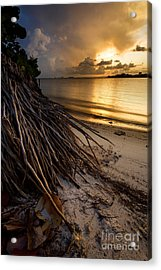 Back To Your Roots Acrylic Print by Matt Tilghman