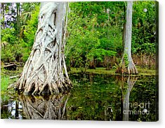 Backcountry Acrylic Print
