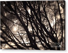 Backlit Branches Of A Majestic Tree I Acrylic Print