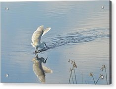 Backlit Reflection Acrylic Print