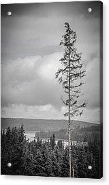 Tall Tree View Acrylic Print