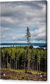 Logging Road Ocean View  Acrylic Print