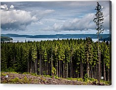 Logging Road Landscape Acrylic Print