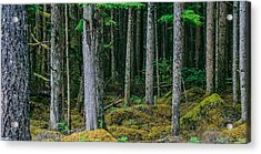 Inside View Backroad Forest Acrylic Print