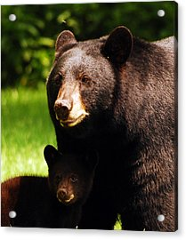 Backyard Bears Acrylic Print by Lori Tambakis
