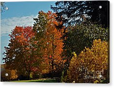 Acrylic Print featuring the photograph Backyard Beauty by Judy Wolinsky