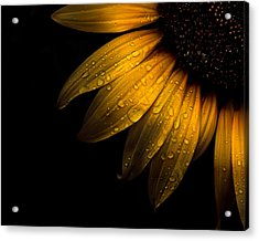 Backyard Flowers 28 Sunflower Acrylic Print
