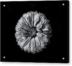Backyard Flowers In Black And White 10 After The Storm Acrylic Print