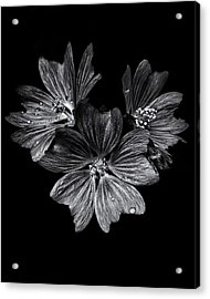 Backyard Flowers In Black And White 11 After The Storm Acrylic Print