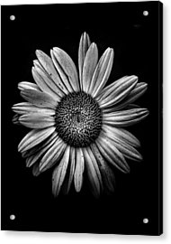 Backyard Flowers In Black And White 13 Acrylic Print