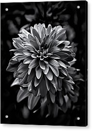 Backyard Flowers In Black And White 15 Acrylic Print