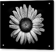 Backyard Flowers In Black And White 17 After The Storm Acrylic Print