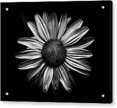 Backyard Flowers In Black And White 18 Acrylic Print