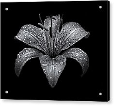 Backyard Flowers In Black And White 8 After The Storm Acrylic Print