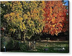 Backyard Morning In The Fall Acrylic Print