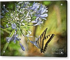 Backyard Nature Acrylic Print by Peggy Hughes