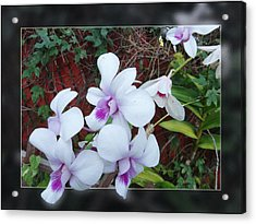 Acrylic Print featuring the photograph Backyard Orchid Two by Ginny Schmidt