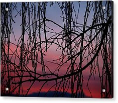 Backyard Sunset Acrylic Print