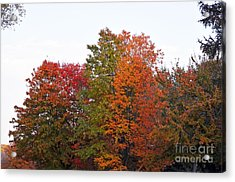 Acrylic Print featuring the photograph Backyard Trees by Judy Wolinsky