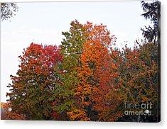 Backyard Trees Acrylic Print by Judy Wolinsky