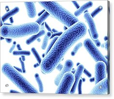 Bacteria Acrylic Print by Alfred Pasieka