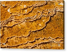 Bacterial Mat - 9 Acrylic Print by Dan Hartford