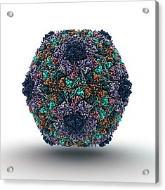 Bacteriophage Particle Acrylic Print by Animate4.com/science Photo Libary