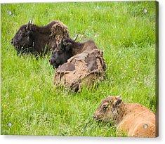 Bison Bad Fur Day Acrylic Print