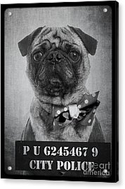 Bad Dog Acrylic Print by Edward Fielding
