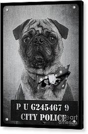 Bad Dog Acrylic Print by Edward Fielding