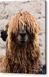 Bad Hair Day Acrylic Print by James Brunker