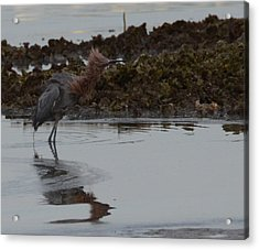 Bad Hair Day Acrylic Print by Julie Cameron