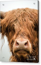 Bad Hair Day Acrylic Print by Linsey Williams