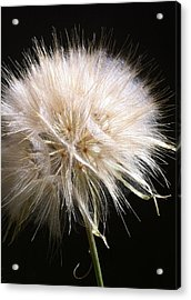 Bad Hair Day Acrylic Print by Stephanie Aarons