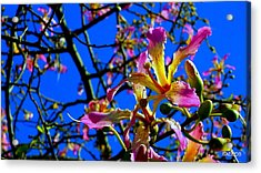 Bad Orchid  Acrylic Print