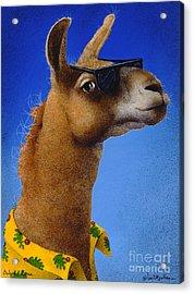 Bahama Llama... Acrylic Print by Will Bullas